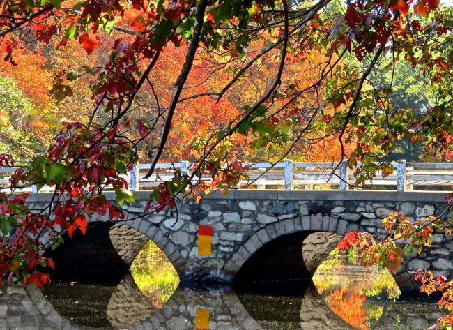 Old Stone Bridge Autumn In New England Charles River Fall Colors Fall Beauty River View Water Reflections Mirror Reflection