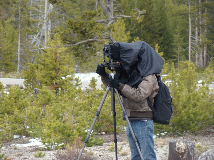 Adventure Beauty In Nature CameraMan Casual Clothing Day Forest Growth Landscape Leisure Activity Lifestyles Mountain Nature Non-urban Scene Outdoors Plant Tranquil Scene Tranquility Tree Tree Trunk USA Yellowstone