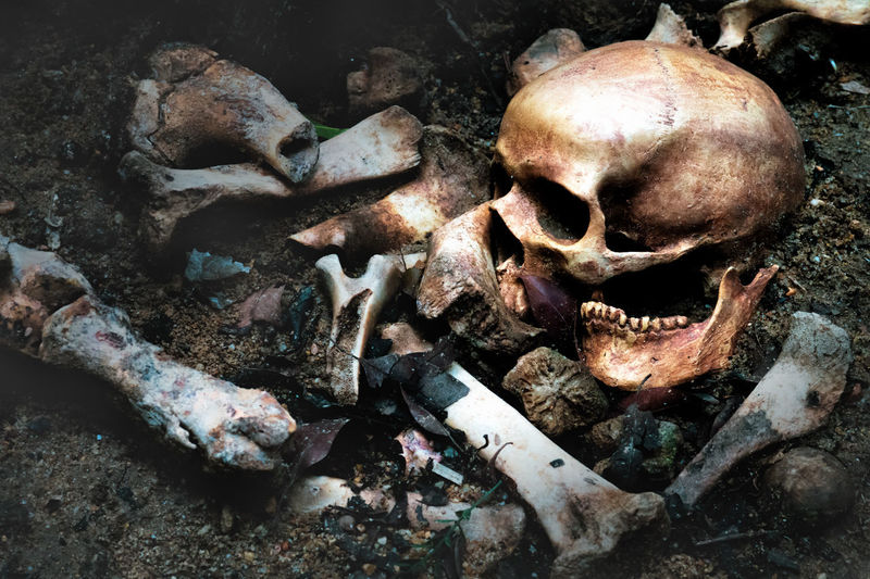 Still life art of old human skull and bones in the pit or scary graveyard Archaeology Bone  Close-up Fear Graveyard Horror Human Skeleton Human Skull Humen Nature Pitbull Skeleton Spooky