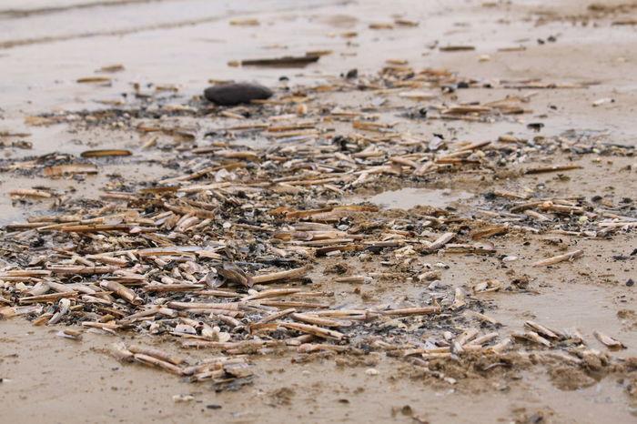 Coquillages Et Crustacés Mer Du Nord