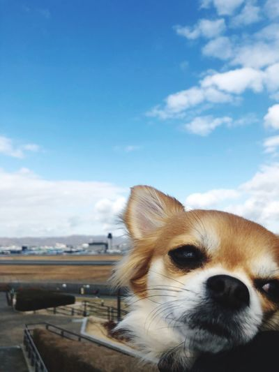 One Animal Dog Canine Mammal Animal Themes Domestic Sky Close-up Looking Animal Head  Vertebrate Animal Body Part Day Animal Domestic Animals Looking Away Pets Cloud - Sky No People Nature