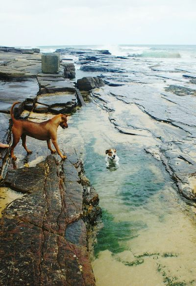 This little dog was very funny chasing fish in the rockpool. No People Two Animals Beach Swimming Dogs Rockpool Sea And Sky Happiness Excited Motion Outdoors Day Enjoying Life Nature Summer PlayfullMood Freedom Showcase: February The KIOMI Collection