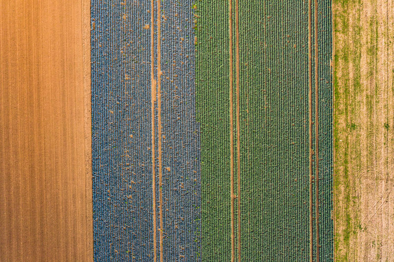 High angle view of plants growing on field
