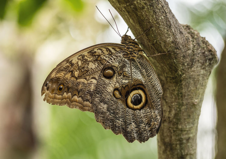 Butterfly Animal Animal Themes Butterfly Butterfly - Insect Butterfly Collection Close-up Day Focus On Foreground Insect Insect Photography Insects  Invertebrate Nature No People One Animal Outdoors Papiliorama Plant Reptile Switzerland Tree Tree Trunk Trunk Vertebrate A New Beginning