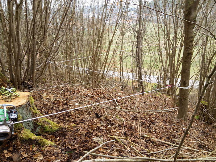 Rope Baumfällung Outdoors Tree No People Seil Baum Im Wald Forest Bqaquaris Bq