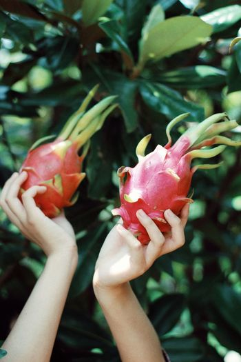 Plant Human Body Part Human Hand Hand Holding Freshness Close-up One Person Flower Food And Drink Healthy Eating Day Finger Focus On Foreground Fruit Red Flowering Plant Food Beauty In Nature Nature EyeEmNewHere