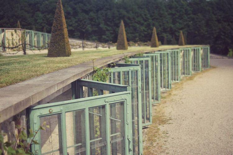 Symmetry Sans Souci Palace Sans Souci Castle No People Tree Outdoors Day Wood - Material Nature Grass