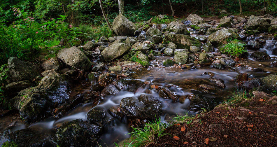 fotografiert an einem regnerischen Samstagvormittag Beauty In Nature Day Flowing Water Forest Long Exposure Moss Motion Nature No People Outdoors Rock - Object Scenics Stream Stream - Flowing Water Tranquil Scene Tranquility Tree Water Waterfall