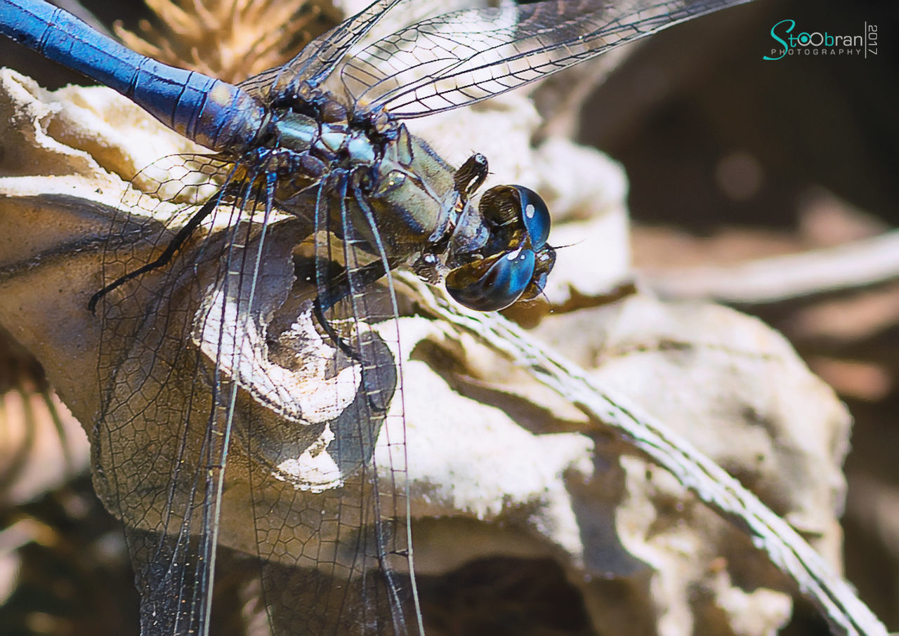 insect, animal themes, one animal, close-up, animals in the wild, focus on foreground, day, outdoors, animal wildlife, no people, nature