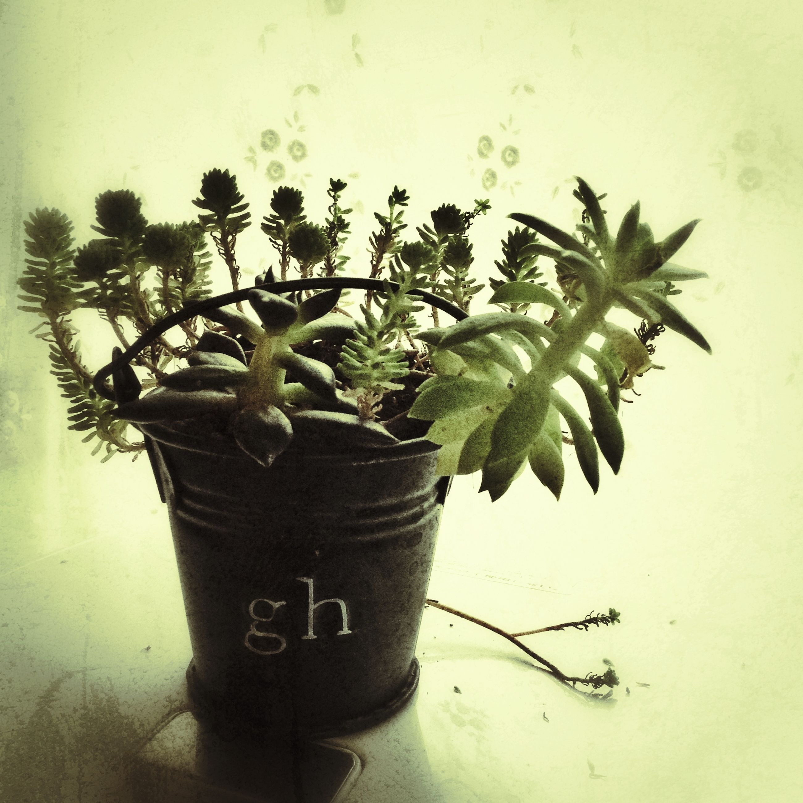 growth, plant, potted plant, leaf, wall - building feature, close-up, wall, green color, indoors, nature, no people, stem, day, green, growing, cactus, vase, built structure, flower pot