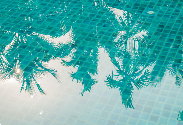hadow of coconut trees on the pool background Animal Themes Animal Wildlife Blue Day Flooring High Angle View Marine Nature No People Outdoors Pool Reflection School Of Fish Swimming Swimming Pool Tile Tiled Floor Transparent Turquoise Colored Underwater Water