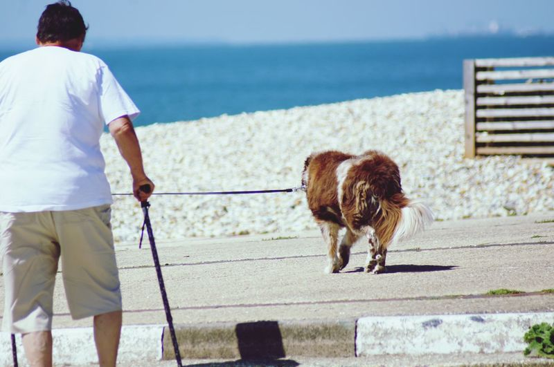 Rear view of man with dog by sea