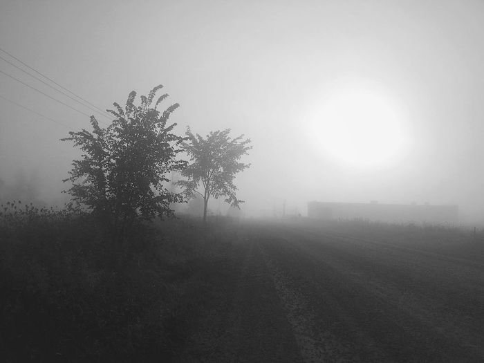 Sometimes you just have to stop on the side of the road... Carpe Diem Bnw for Bnw_friday_eyeemchallenge Rural Landscape Trees Barn Farm Canada Coast To Coast Foggy Morning Overcast Sunrise Taking A Break Showcase: January Atmospheric Mood Appreciate The Little Things In Life Landscapes With WhiteWall My Favorite Photo The Street Photographer - 2016 EyeEm Awards The Great Outdoors - 2016 EyeEm Awards The Great Outdoors With Adobe The Essence Of Summer My Commute Fine Art Photography Home Is Where The Art Is Monochrome Photography My Year My View Long Goodbye Black And White Friday See The Light