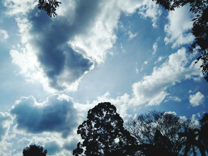 Cloud - Sky Sky Low Angle View Outdoors Day Tree No People Nature