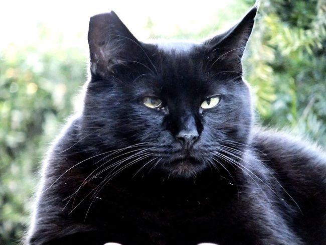 BLackCat Fujifilm Cute Cats Cats Of EyeEm Gatti Catsofinstagram Animals Pets