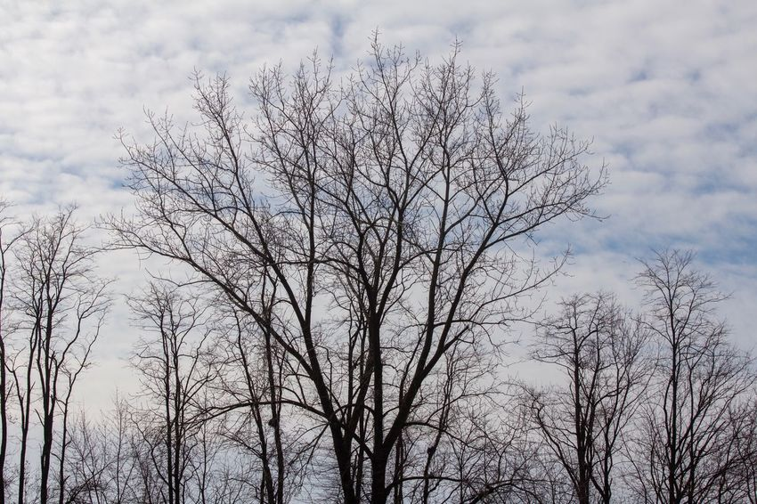 Bare Canon EOS 60D Plant Tree Sky Cloud - Sky Low Angle View Nature No People