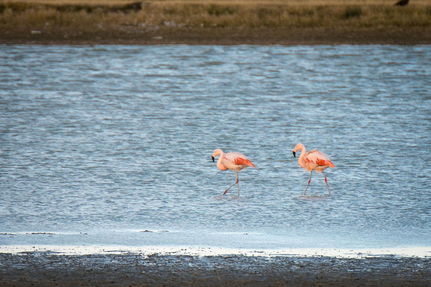 Animal Animal Themes Animal Wildlife Animals In The Wild Beauty In Nature Bird Day Flamingo Group Of Animals Land Nature No People Orange Color Outdoors Pink Color Sea Vertebrate Water