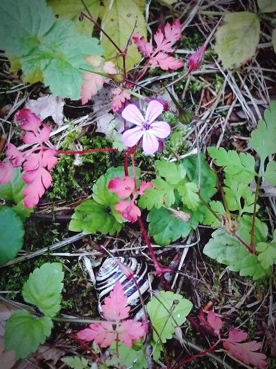 Blumen Waldspaziergang Wald Herbst