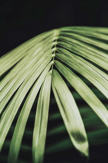 Close-up of palm leaves against black background