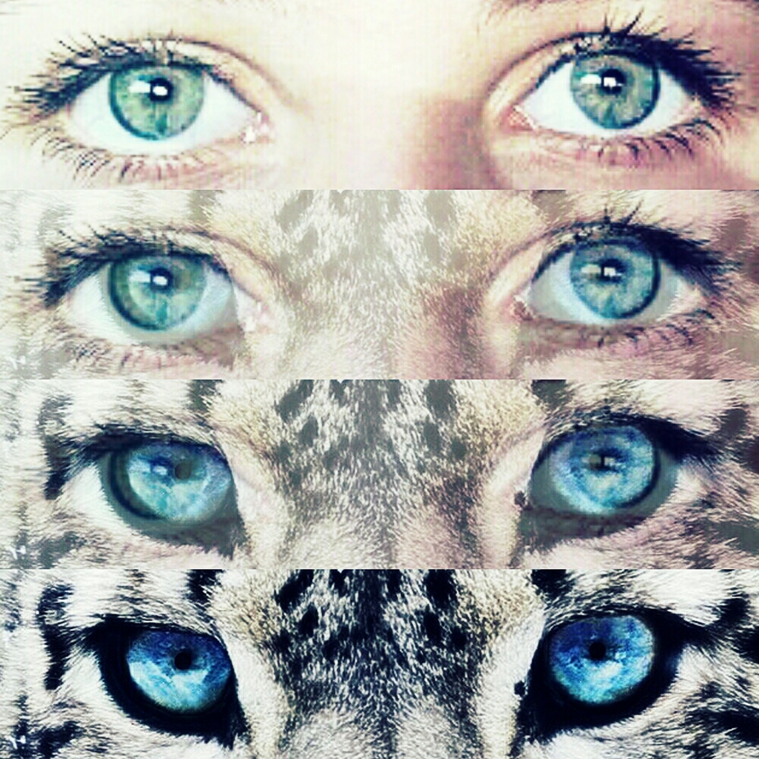 portrait, looking at camera, full frame, human eye, close-up, backgrounds, front view, human face, blue eyes, headshot, part of, eyesight, pattern, detail, animal eye, eyelash, person