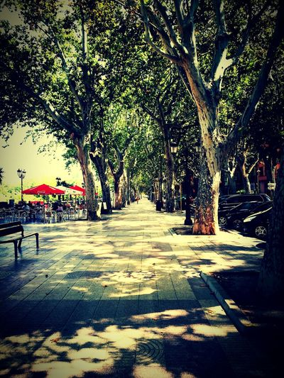 Tree Alameda City Xativa Midday Good Times Treelined Tranquil Scene Tranquility Beauty In Nature Outdoors First Eyeem Photo
