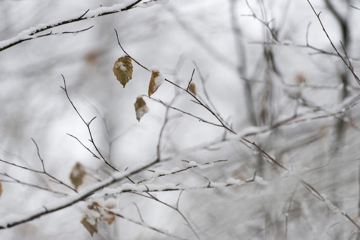 Branch Cold Temperature Day Nature No People Outdoors Snow Weather Winter Winter Leaf