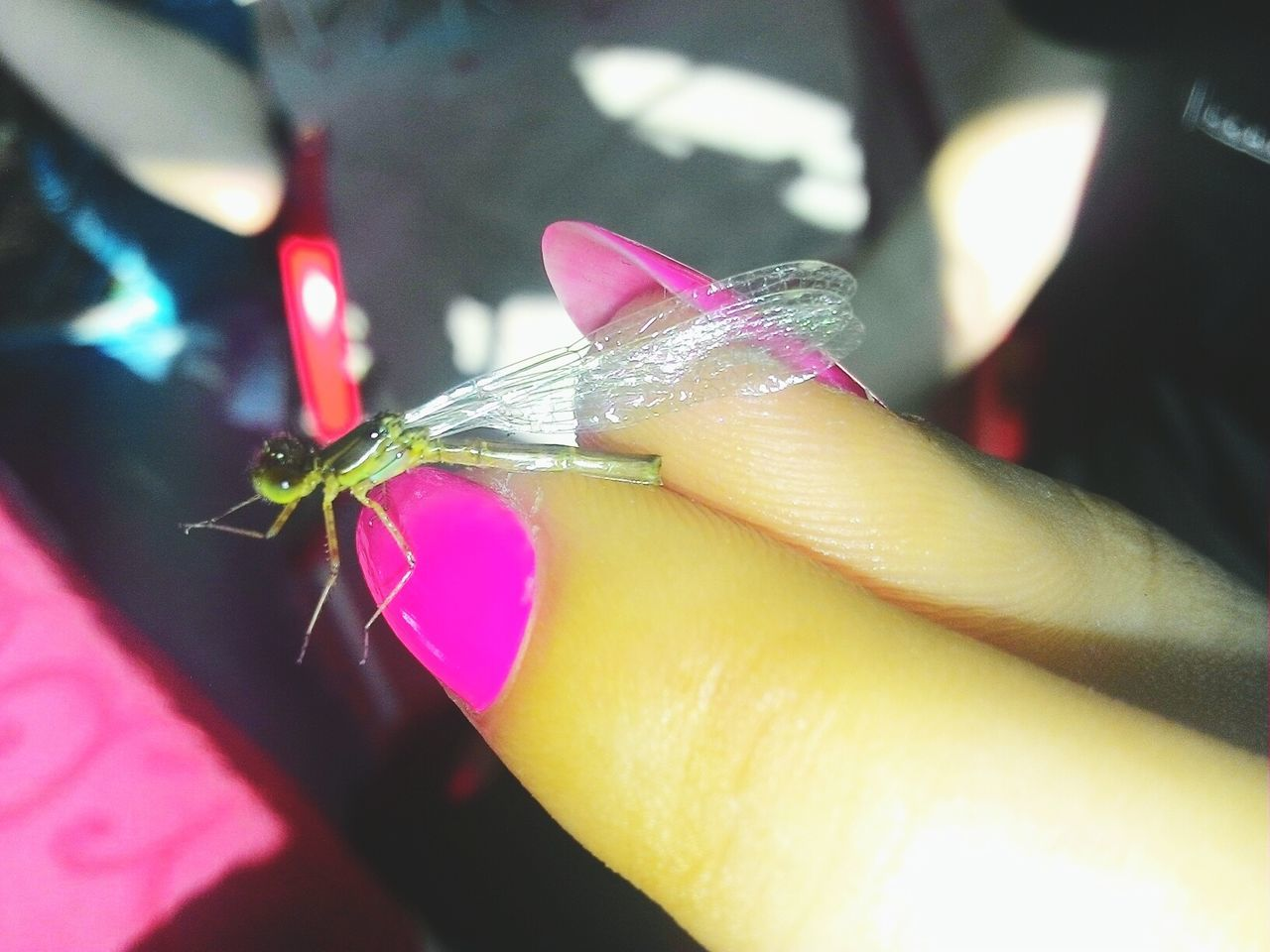 Close-Up Of Woman Holding Dragonfly