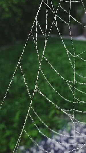 Waterpearls Spiderweb Smartphonephotography Close-up Beauty In Nature Garden Photography Morning Dew