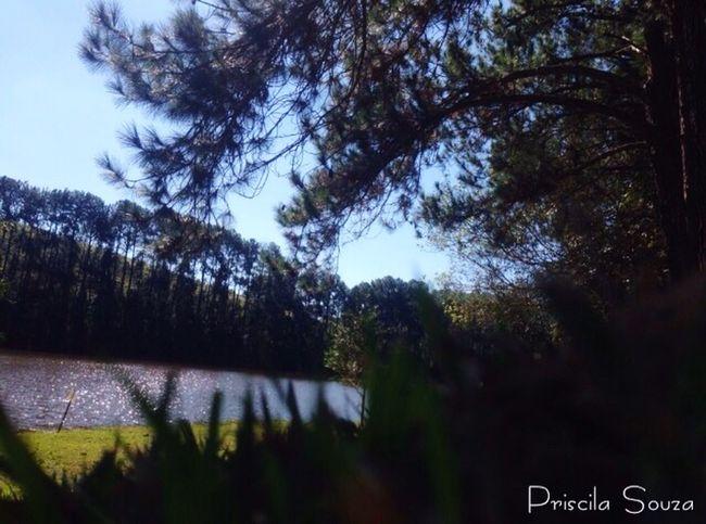 Hortoflorestal Fimdetarde Sol Lago Verde