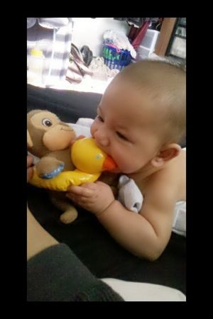 Attacking Mr. Monkey's ducky!