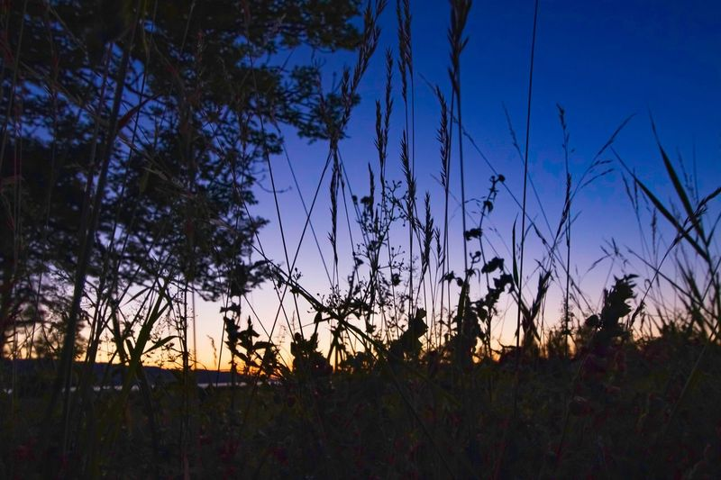 Sunset at Greifensee Eos 80d Schilf Switzerland❤️ EyeEm Best Shots Eyyem Photography Greifensee Sky Plant Tranquility Beauty In Nature Tranquil Scene Growth Tree No People Scenics - Nature Nature Landscape Clear Sky Sunset Environment Outdoors