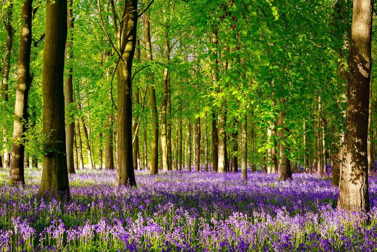 Purple flowering plants by trees in forest