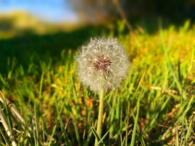 Nature Growth Flower Grass Beauty In Nature Plant Fragility Green Color Focus On Foreground Flower Head Tranquility