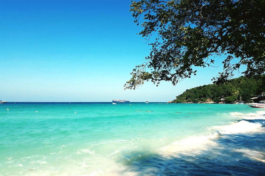 Tree Water UnderSea Clear Sky Sea Beach Blue Summer Tourist Resort Tropical Climate