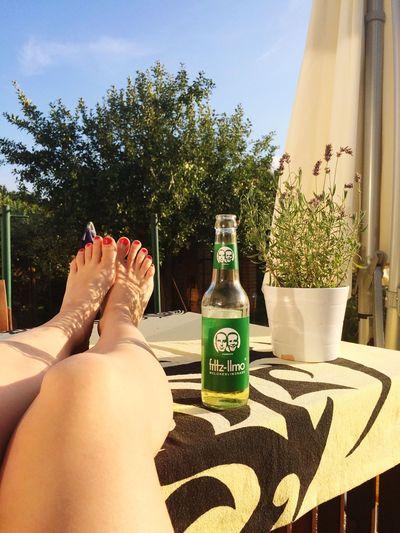 Sommer Sonne Kaktus. Relaxing Summertime Enjoying The Sun Soaking Up The Sun Fritzlimo