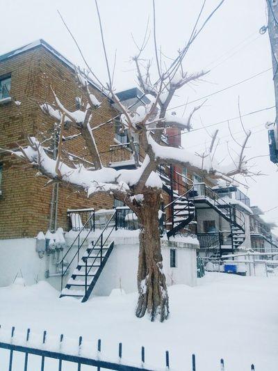 Snow Montreal, Canada Tree Snowing Winter