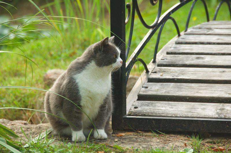 Cat Cats Of EyeEm Adult Cat Bridge Footbridge Gtass Sitting Pets Animal Themes Close-up Grass Tabby Kitten