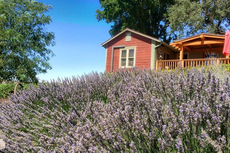 Winery Vinyard Pomar Junction Lavender Nature Flower House