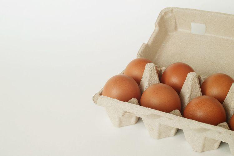 Egg Tray Studio