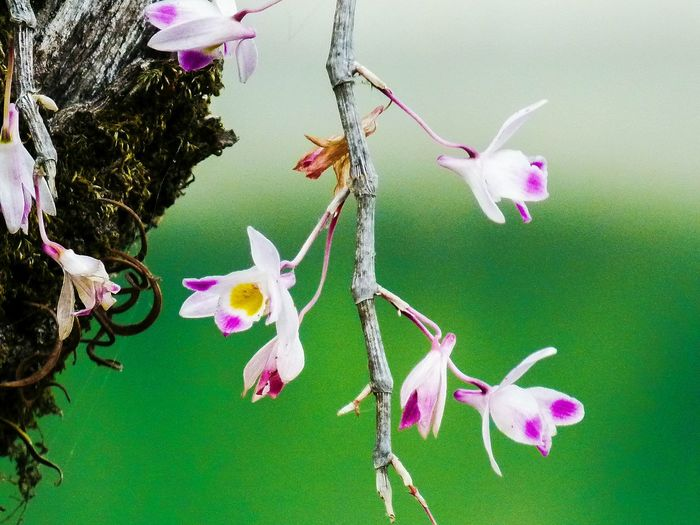 Wild Orchid..