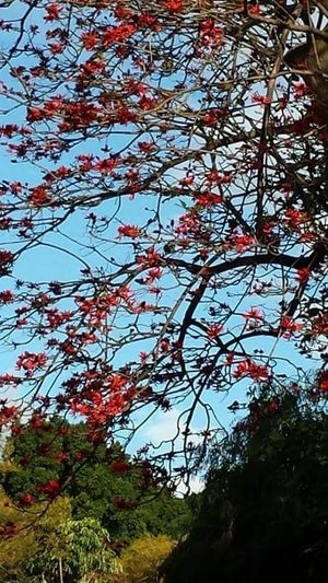 Tree Nature Beauty In Nature Low Angle View Growth Sky Outdoors Branch No People Day Red Scenics Freshness Subiaco