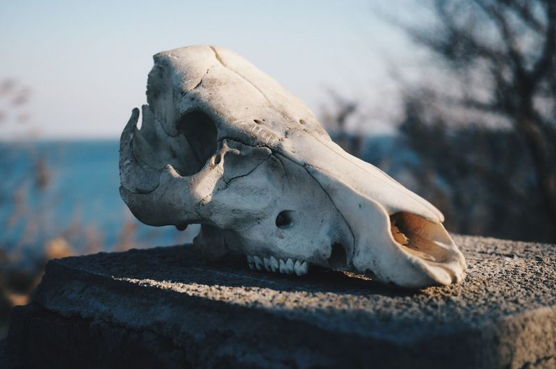 Close-Up Of Skull Against Sky