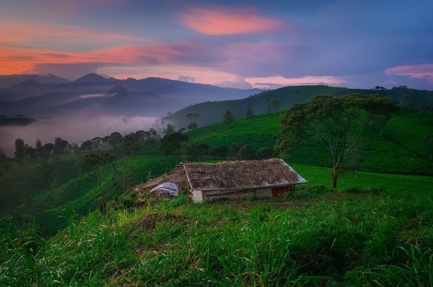 little home in paradise.. Location : Sunrise point Cukul, Pangalengan, West Java, Indonesia Cukul Pangalengan INDONESIA Landscape_Collection Nature Nature_collection Sunrise Sunrise_sunsets_aroundworld Sunrise_Collection EyeEm Best Shots EyeEm Best Shots EyeEm Nature Lover Mountain Rural Scene Agriculture Field Farm Sky Tea Crop Plantation Agricultural Field EyeEmNewHere