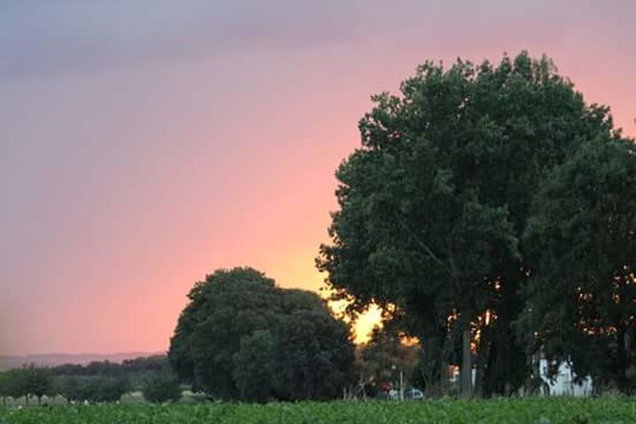 Pink Color Sunset Trees Sky Canon EOS 1300D With My Friend Beauty In Nature Walking Around Taking Pictures See What I See Fresh On Eyeem  Sunset_collection Sunset #sun #clouds #skylovers #sky #nature #beautifulinnature #naturalbeauty #photography #landscape Sunsetporn Sunset_captures Sunsets Sunset Colors Beautiful Nature Beautiful Sunset Saturdayevening Saturday Evening Taking Photos Outdoor Photography Sunsetlover Sunset_collection Zonsondergang