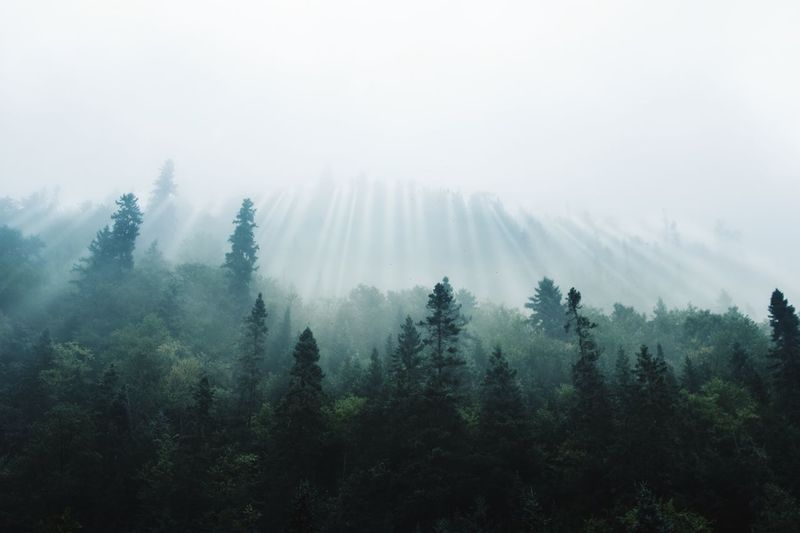 Deep woods fog Tree Fog Nature Mist Tranquil Scene Beauty In Nature Growth Tranquility Hazy  Forest No People Landscape Day Scenics Outdoors Mountain Sky Lost In The Landscape