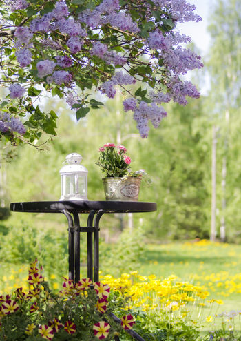 Beauty In Nature Blossom Day Flower Flower Arrangement Flowering Plant Freshness Nature No People Outdoors Summer Tree