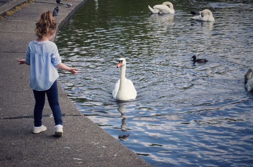 What? Back Of Person Blonde Casual Clothing Child Children Cute Day Feeding The Birds Glasgow  Lakeshore Leisure Activity Nature Outdoors Pont Rippled Scotland Street Sunset Swan The Street Photographer - 2016 EyeEm Awards Water Water Bird Battle Of The Cities Adapted To The City