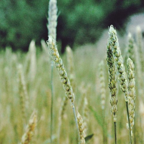 🌾🌾 First Eyeem Photo