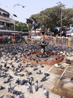 #Kabutarkhana Amidstchaos Bird Birds In A Feather Birds In Flight City Life India Multiplicity Mumbai Outdoors Pigeons Thirsty Birds