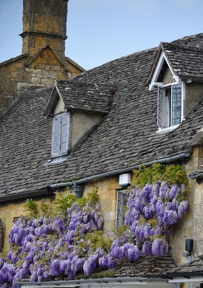 Architecture Beauty In Nature Blooming Blossom Blue Building Exterior Built Structure Cotswolds Day Façade Flower Flowers Fragility Freshness Growth In Bloom Low Angle View Nature No People Outdoors Petal Plant Residential Building Residential Structure Wisteria